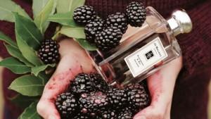 blackberry_bay_33177